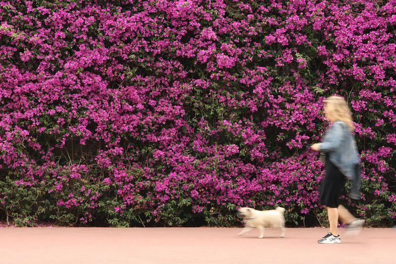 Beneficios para la salud de caminar